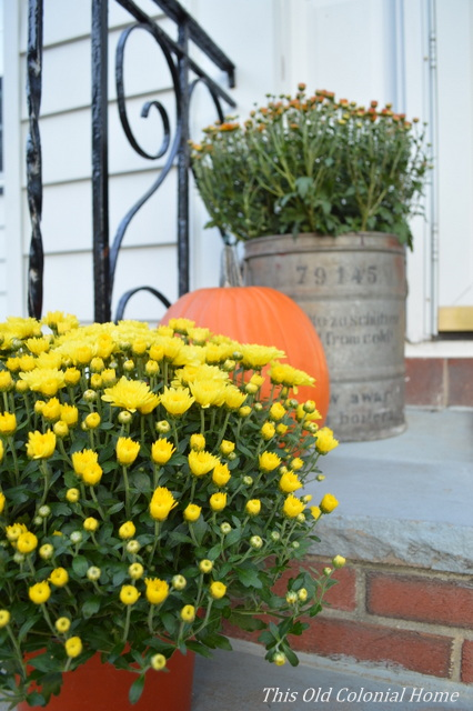 Yellow mums and planter