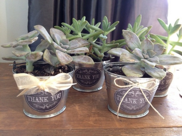 DIY wedding favor using small bucket and succulents
